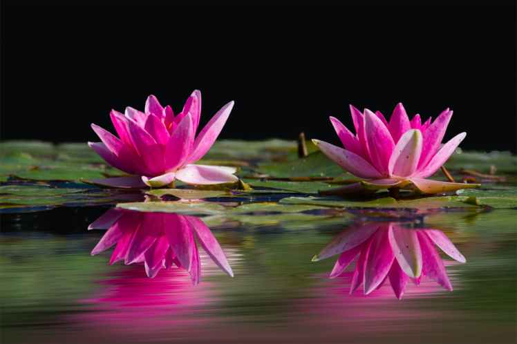 nature water flowers lake